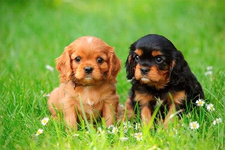 3-puppies