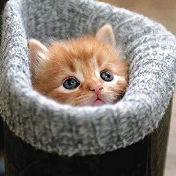 cosy kitten1